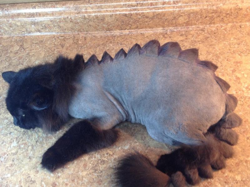 Cat Groomed Like Dinosaur