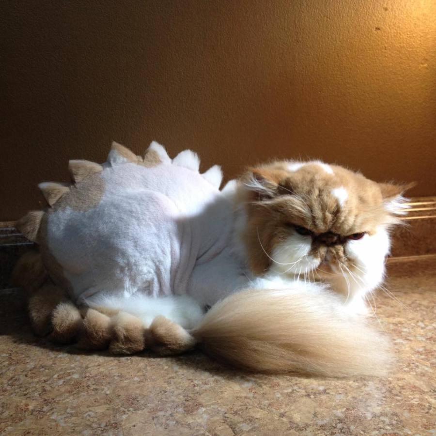 Cats Cut Like Lions