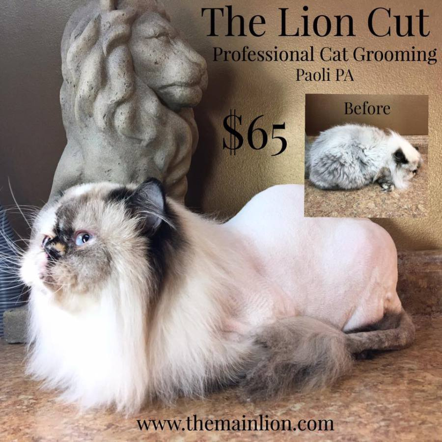 THE LION CUT $65 includes Style and Shampoo