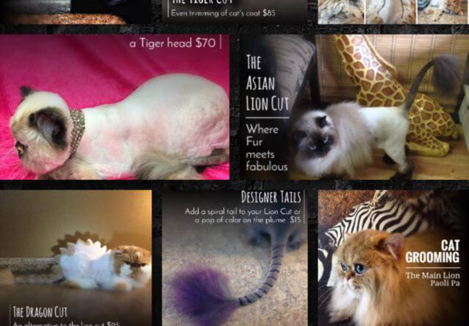 Cat Grooming - Fur Styles For Your Cat